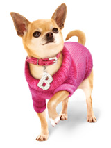 Bruiser's Outfit - Pink Sweater / Diamante Collar & Lead Set - The Pink Knitted Turtle Neck Sweater and Crocodile Pink Collar are both worn by Bruiser the Chihuahua in Legally Blonde The Musical, starring in London's West End. Give your pup star quality and save when you buy both together!<br /><br />